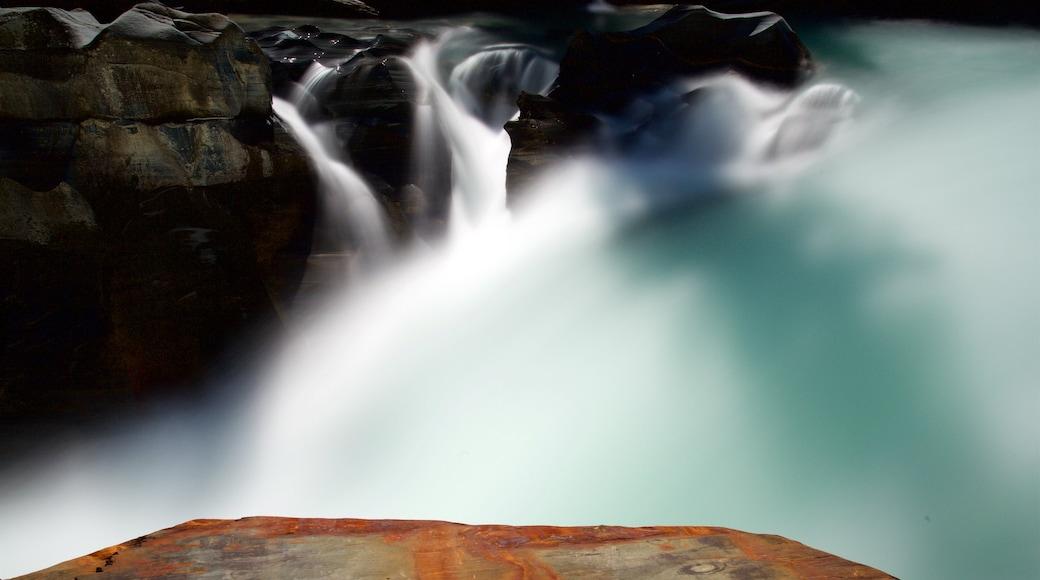 Kootenay National Park welches beinhaltet Fluss oder Bach