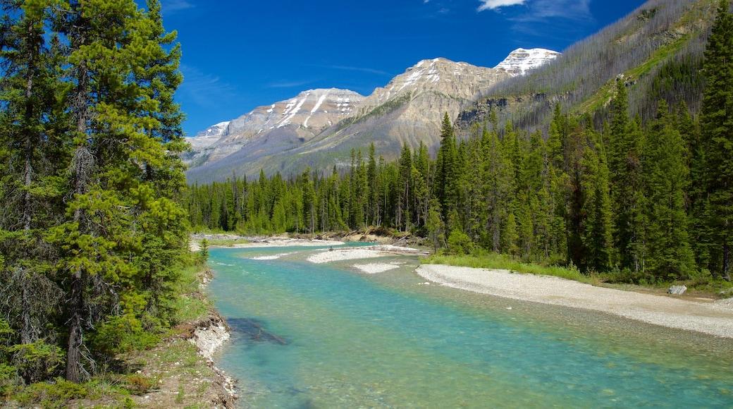 Kootenay National Park das einen Fluss oder Bach, Berge und ruhige Szenerie
