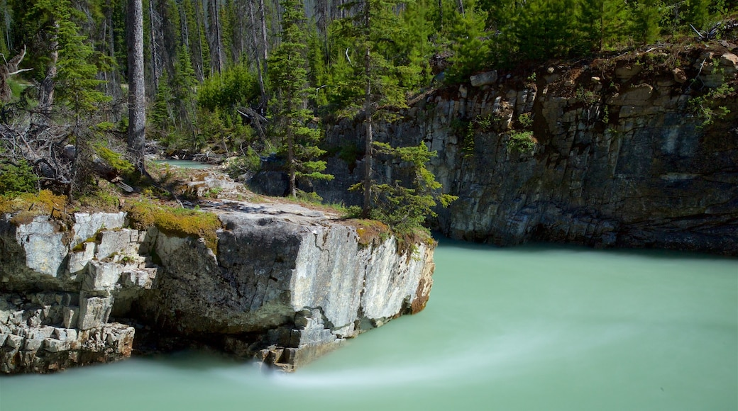 Kootenay National Park featuring a river or creek and tranquil scenes