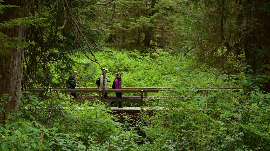 Rainforest Trail featuring forests and a bridge as well as a small group of people