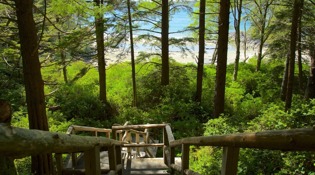 Tonquin Park showing general coastal views and forest scenes