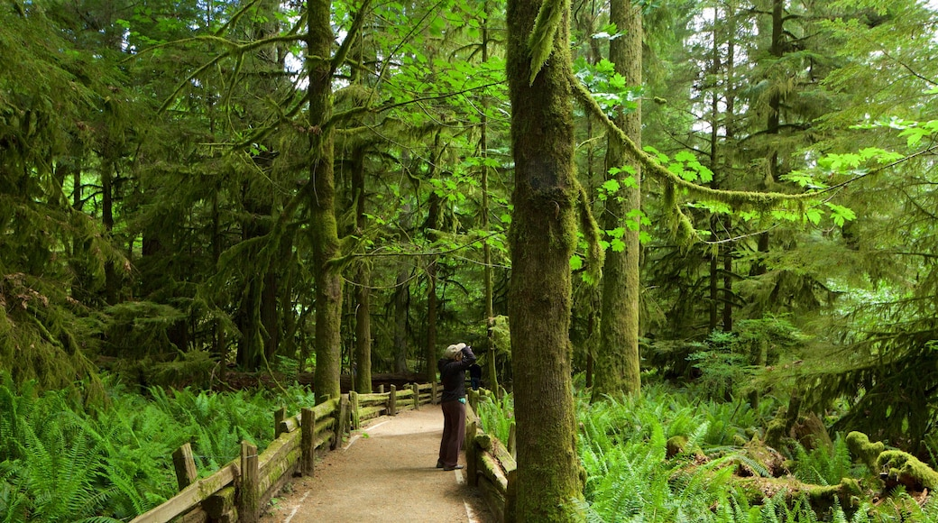 MacMillan Provincial Park which includes forests as well as a small group of people