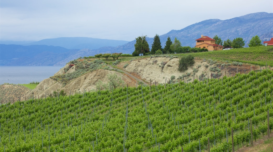Penticton featuring tranquil scenes and farmland