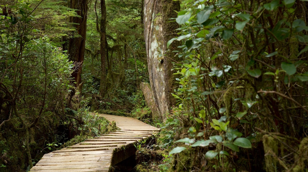 Rainforest Trail showing forests and a bridge