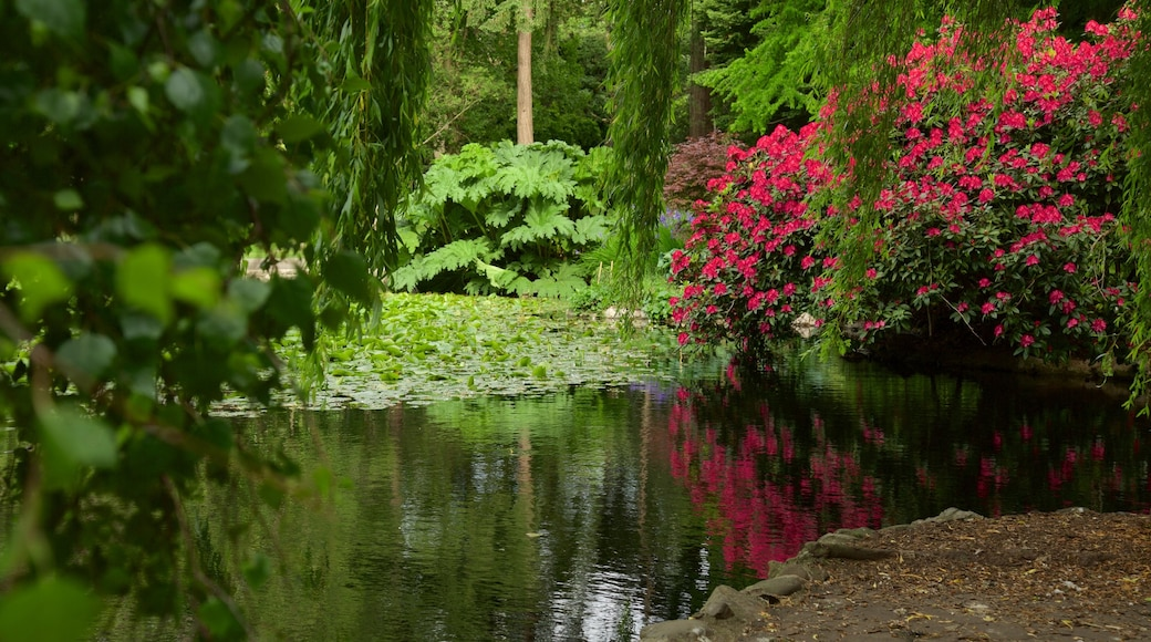 Beacon Hill Park which includes wild flowers, a pond and a garden