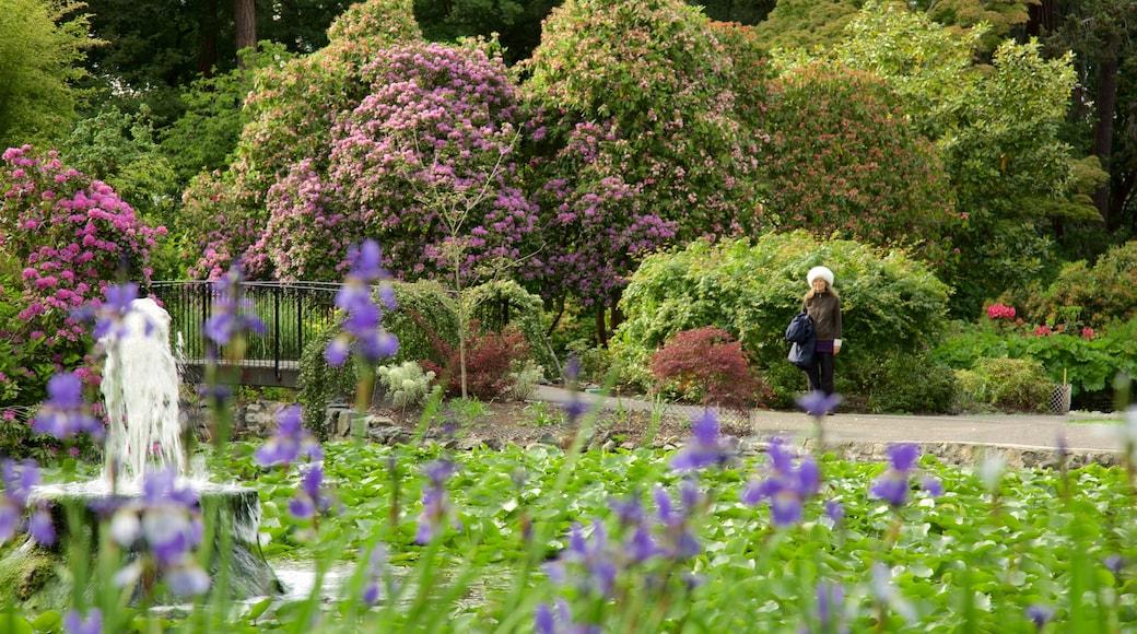 Beacon Hill Park showing a fountain, a garden and a pond