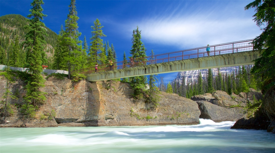 Yoho National Park showing a bridge and a river or creek