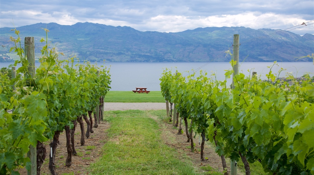 Quails\' Gate Estate Winery showing tranquil scenes and a river or creek