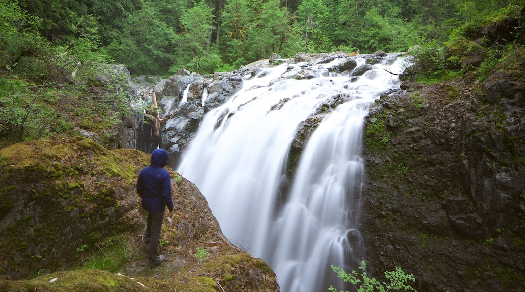 Englishman River Falls Provincial Park which includes forest scenes and a cascade as well as an individual male