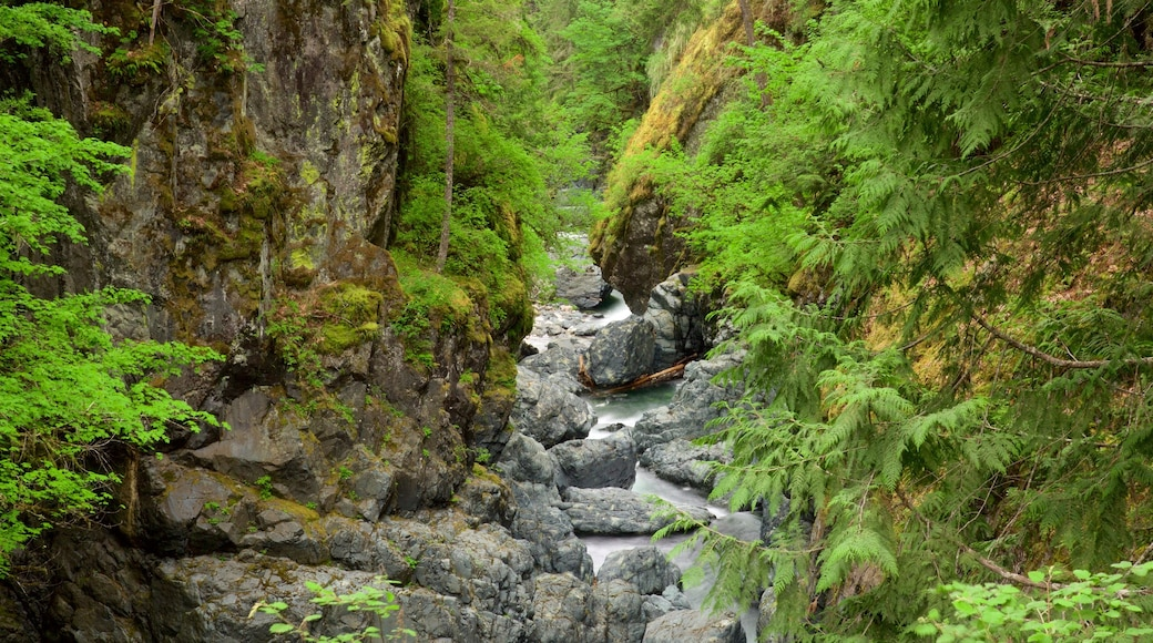 Englishman River Falls Provincial Park which includes a river or creek and forest scenes