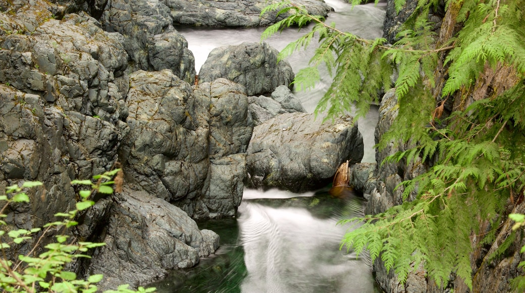 Englishman River Falls Provincial Park featuring a river or creek