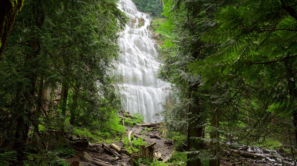 Bridal Veil Falls featuring forests and a cascade