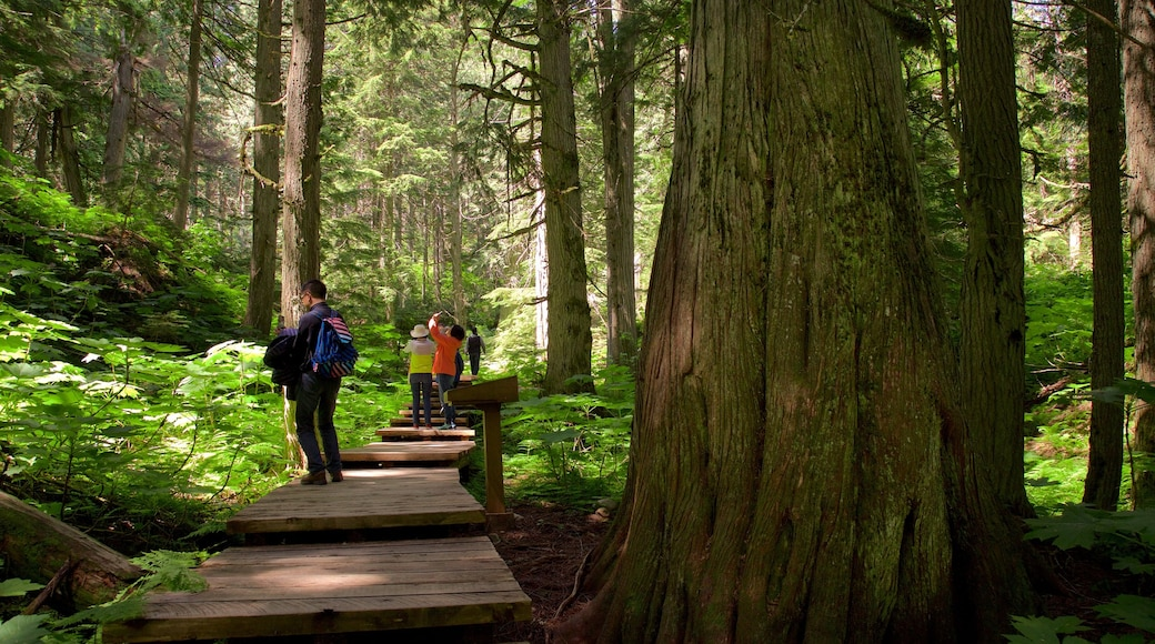 Giant Cedars Boardwalk Trail featuring forest scenes as well as a small group of people