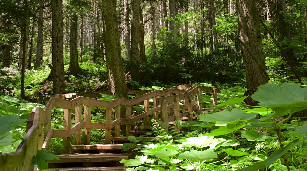 Giant Cedars Boardwalk Trail which includes forests