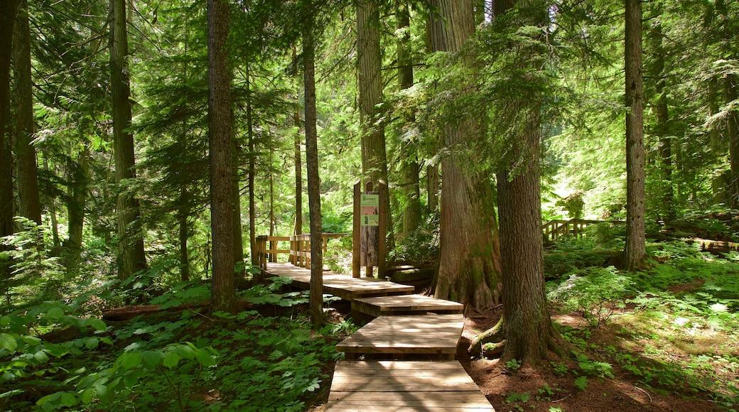 Giant Cedars Boardwalk Trail featuring a bridge and forest scenes