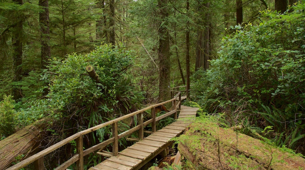 Rainforest Trail which includes a bridge and forest scenes