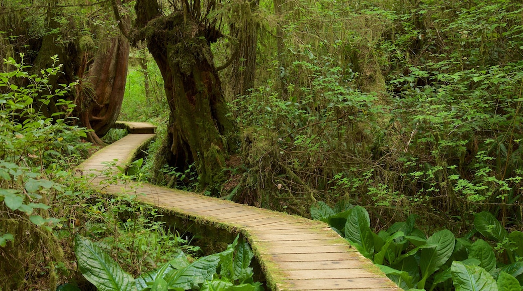 Rainforest Trail which includes forests and a bridge