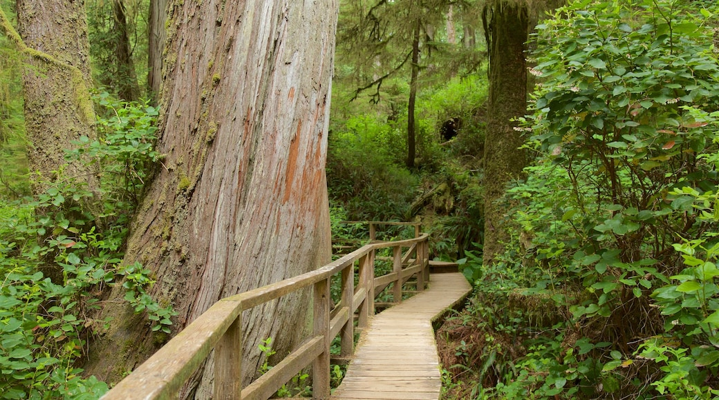 Rainforest Trail featuring forest scenes and a bridge