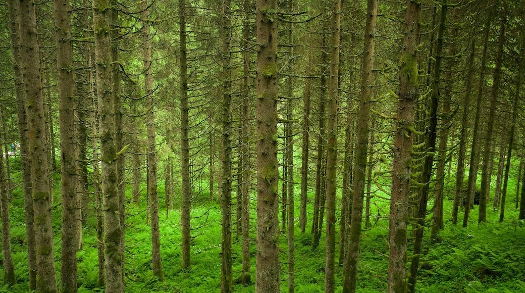 Krimmler Wasserfälle das einen Waldmotive