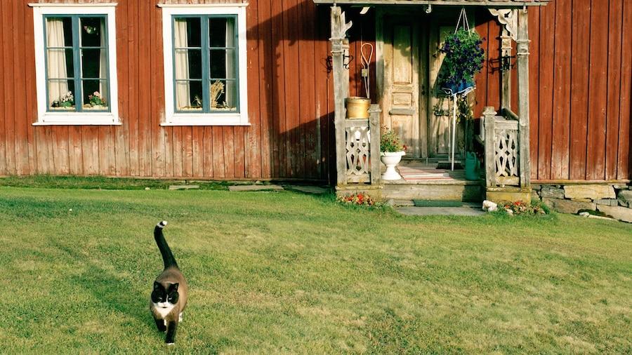 Falun som visar gulliga djur och ett hus