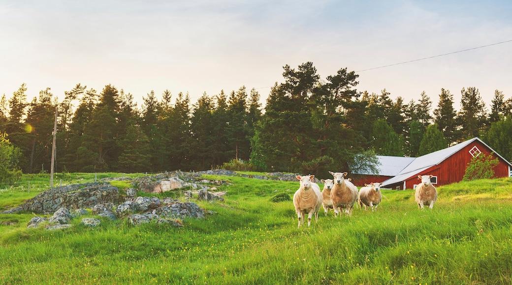 Linköping presenterar åkrar, landdjur och skogslandskap
