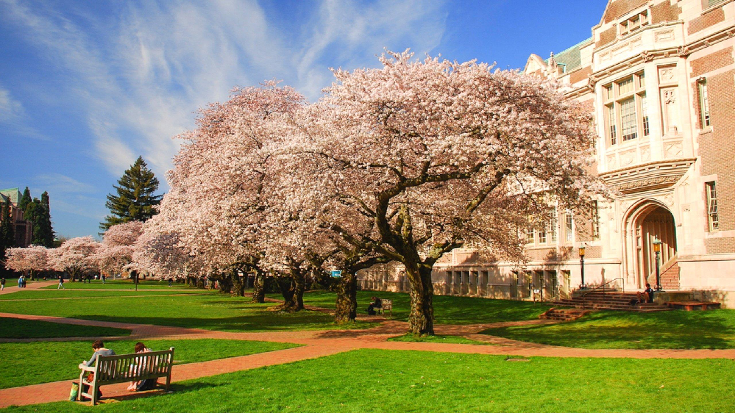 Northeast Seattle, Washington, United States of America