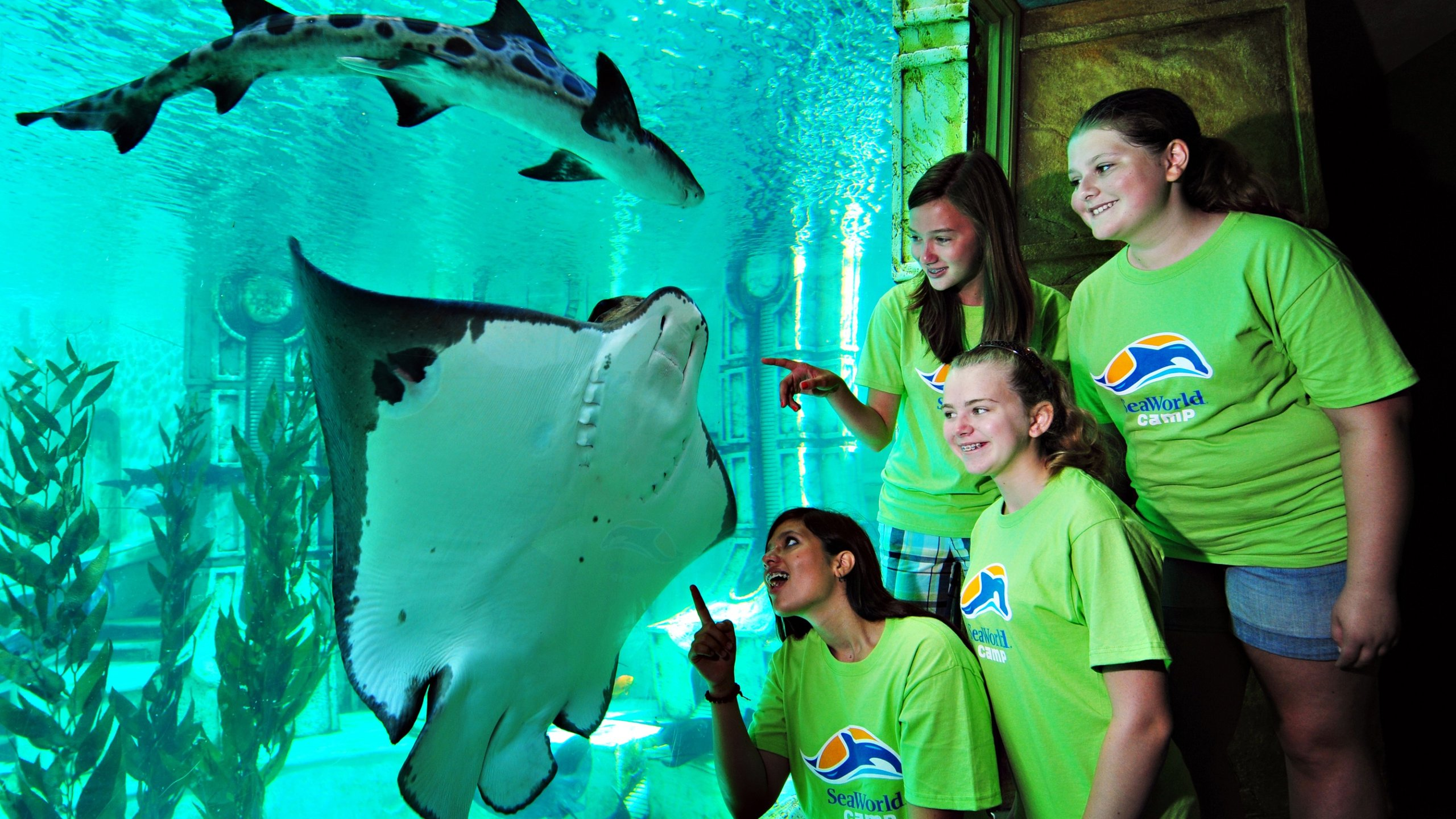 Destino favorito para férias em família, o local oferece incríveis atividades de interação com animais, passeios divertidos e exibições informativas.