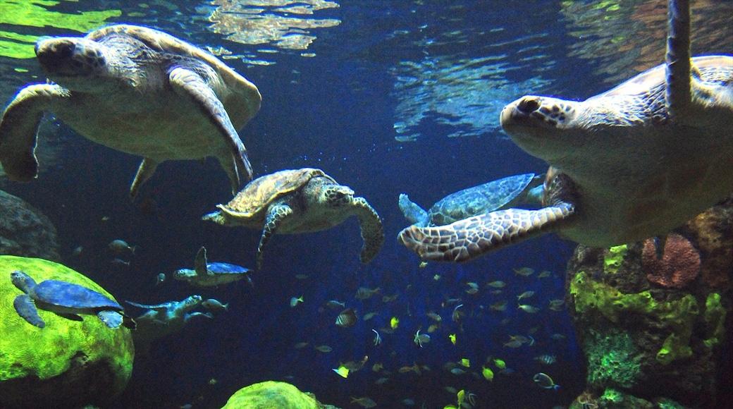 Seaworld แสดง การตกแต่งภายใน และ ชีวิตทางทะเล