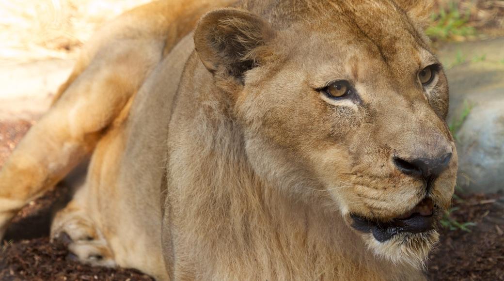 สวนสัตว์แซนดีเอโก เนื้อเรื่องที่ สัตว์ในสวนสัตว์ และ สัตว์อันตราย