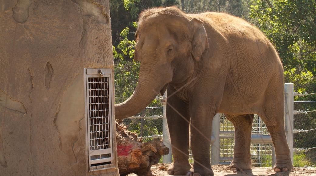 สวนสัตว์แซนดีเอโก เนื้อเรื่องที่ สัตว์บก และ สัตว์ในสวนสัตว์