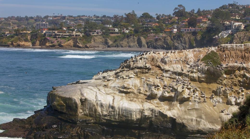 La Jolla Cove caracterizando paisagem e litoral acidentado