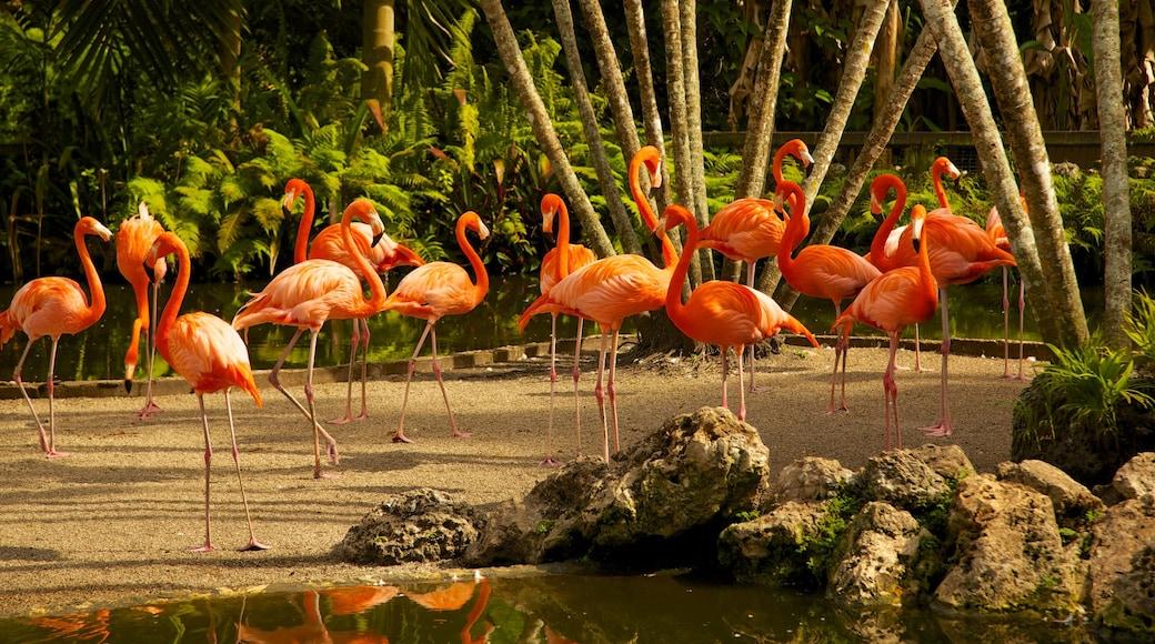 Flamingo Gardens featuring bird life, a pond and a park