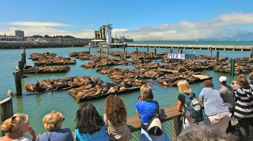 Fisherman\'s Wharf showing marine life and a marina as well as a small group of people
