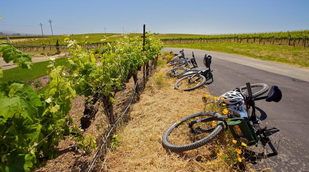 Napa Valley which includes landscape views, mountain biking and farmland