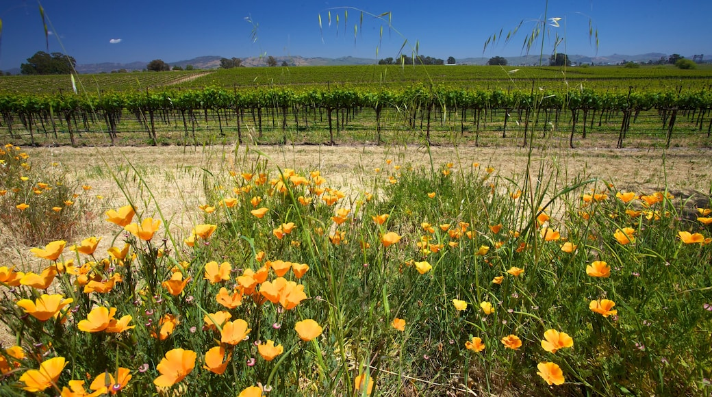 California Wine Country featuring wildflowers