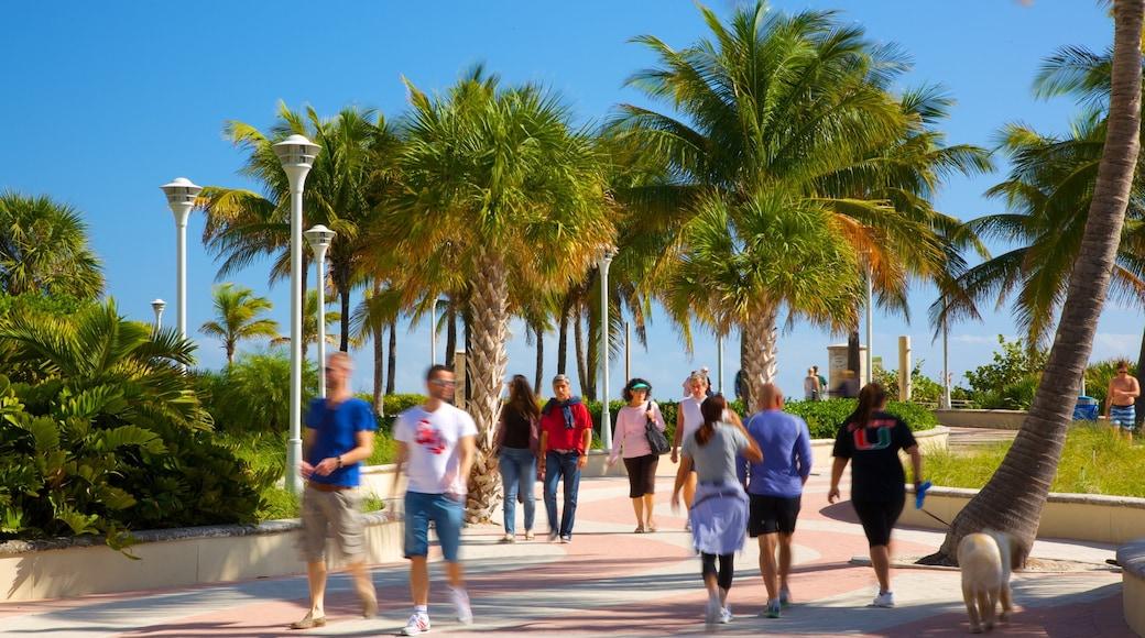Miami Beach che include paesaggio tropicale e parco