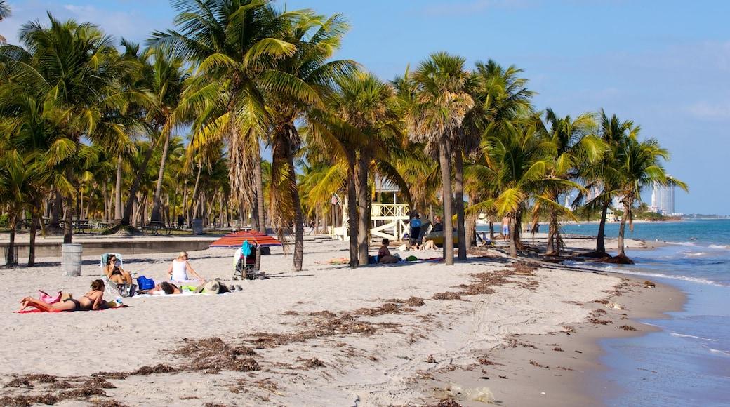 Key Biscayne toont tropische uitzichten, een strand en landschappen