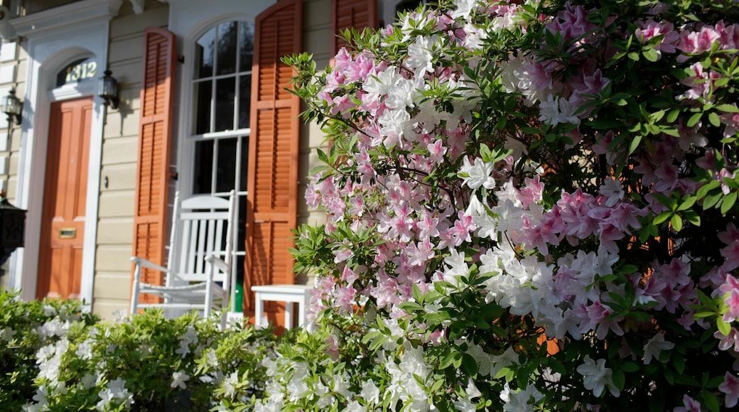 Garden District เนื้อเรื่องที่ ดอกไม้, บ้าน และ สวน