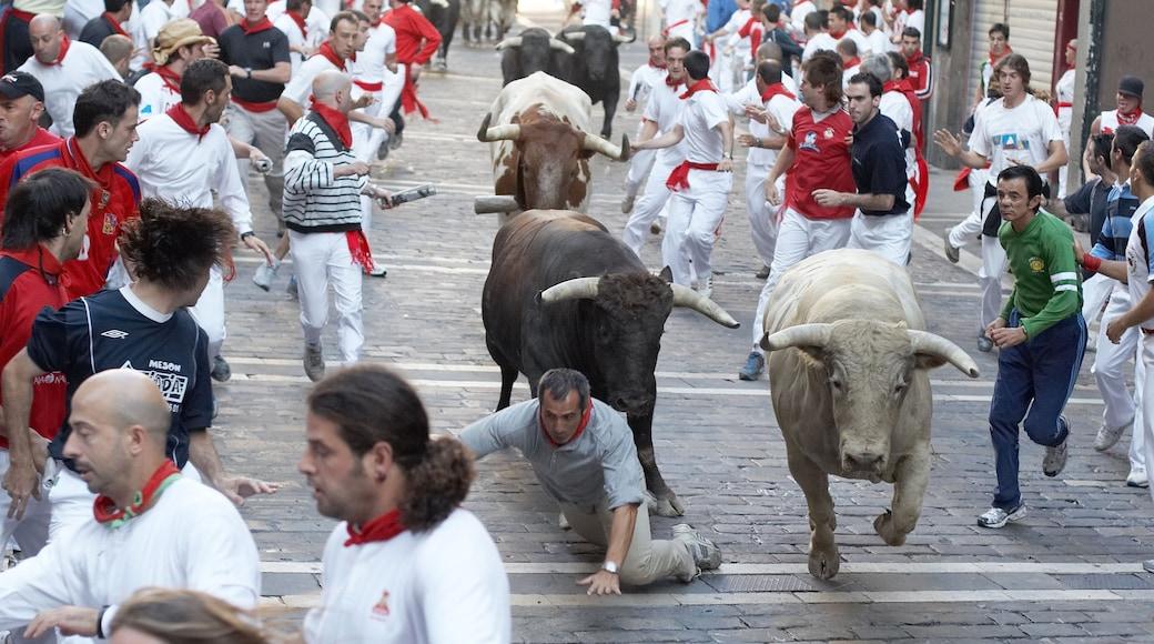 Pamplona que incluye animales peligrosos y también un grupo grande de personas
