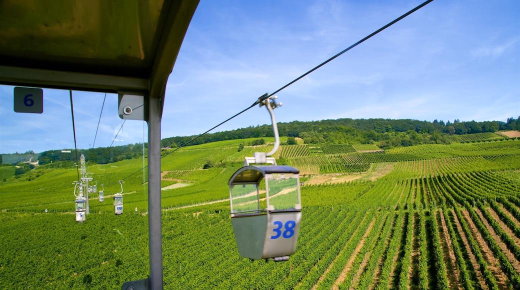 Rheingau Wine Region featuring farmland, a gondola and tranquil scenes