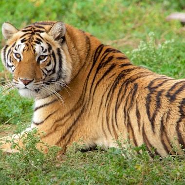 Tuzoofari Zoo