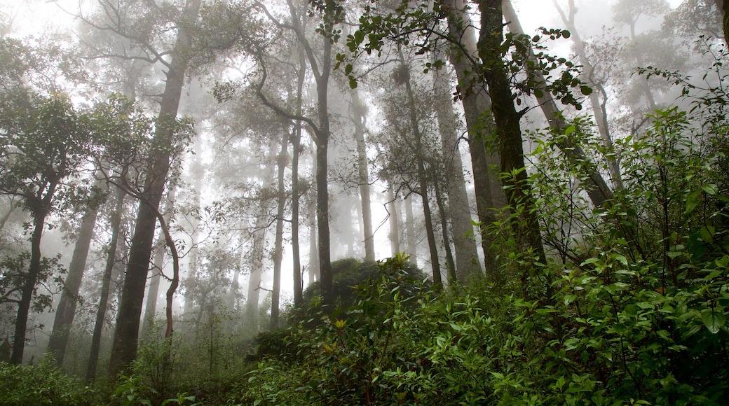 Parque Nacional Mineral del Chico