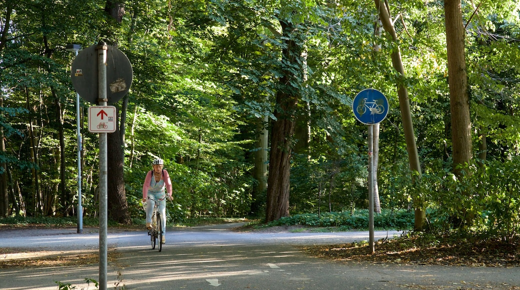Eilenriede das einen Fahrradfahren und Park