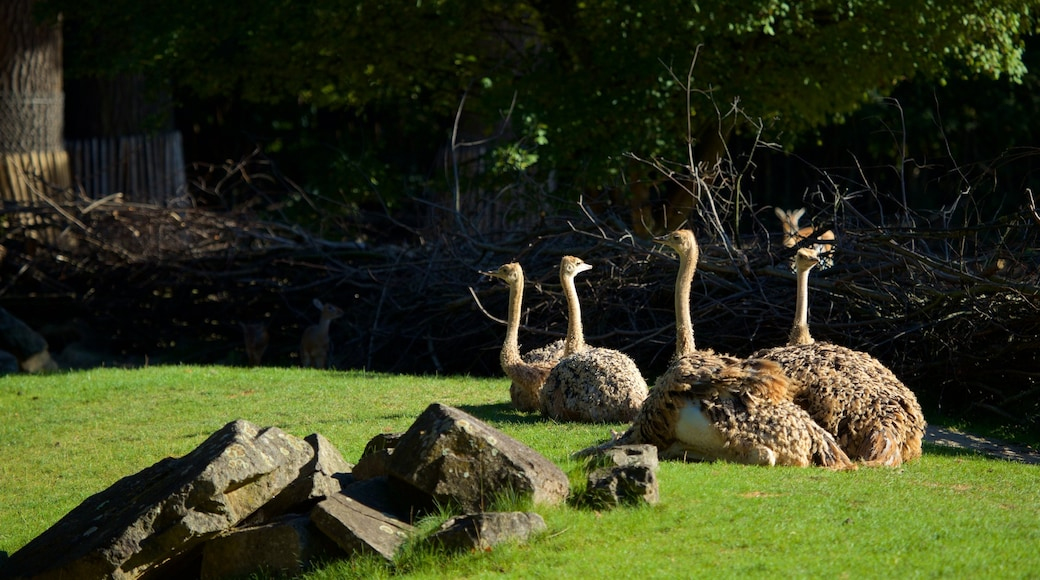 Zoo Hannover welches beinhaltet Vögel und Zootiere