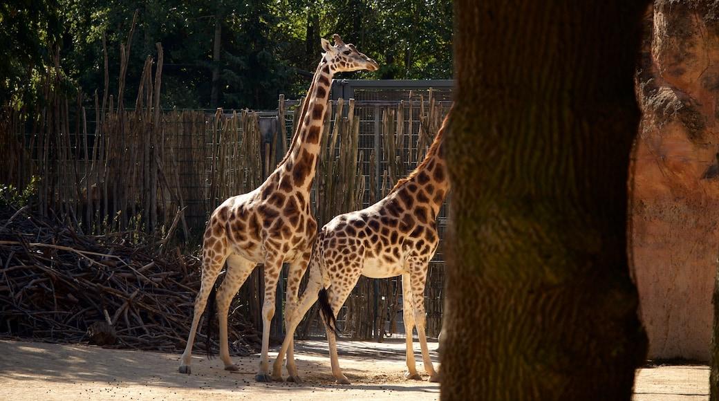 Zoo Hannover mit einem Zootiere und Landtiere