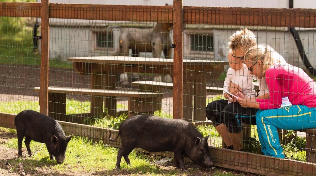 Lillestrøm som viser dyrehagedyr og koselige dyr i tillegg til familie