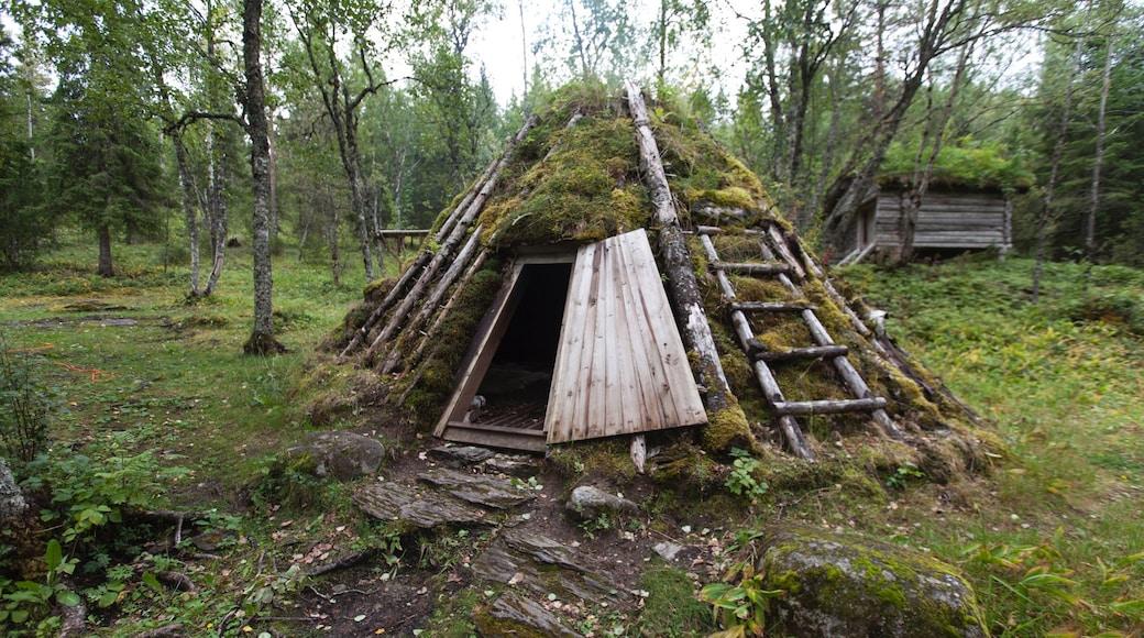 Steinkjer fasiliteter samt kulturarv og skoglandskap