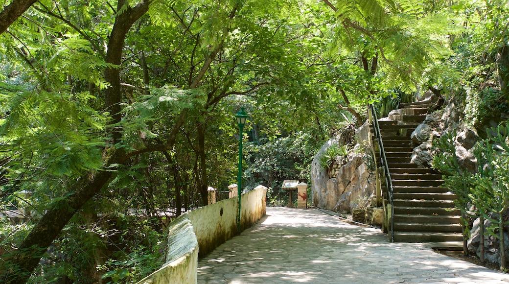 Taxco mostrando un parque