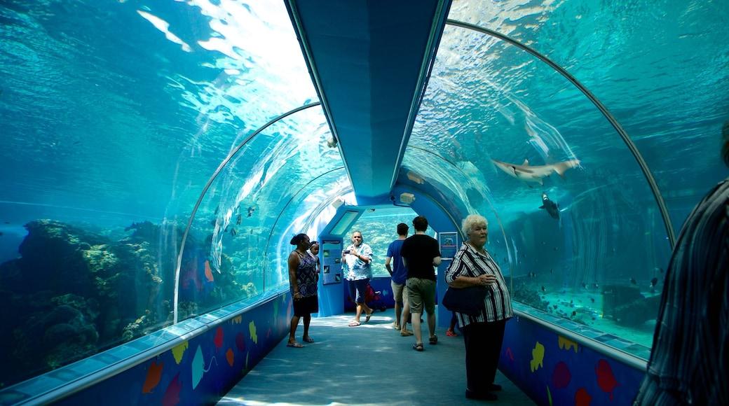 Townsville ofreciendo vida marina y vistas interiores y también un pequeño grupo de personas