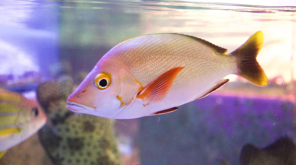 Queensland showing marine life